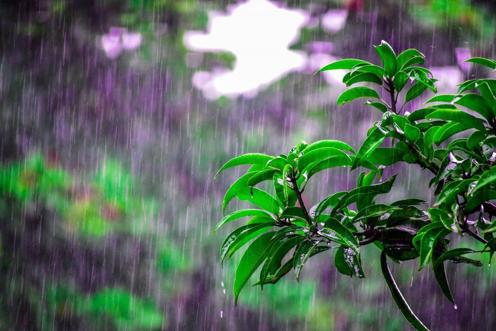 duurzaam leven met regenwater