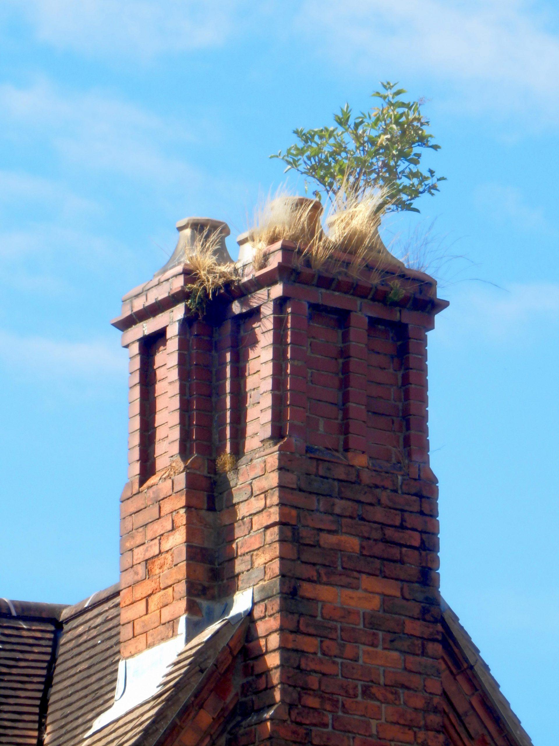 schoorsteen met plant